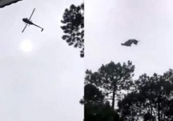 Gettano dall'elicottero un maiale morto dentro una piscina. Sdegno in Uruguay L'incidente nell'esclusiva località balneare Punta del Este, ad est della capitale Montevideo coinvolge un uomo d'affari argentino - CorriereTV