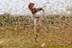 Invasione di locuste nell'Africa orientale: la più grave da 25 anni