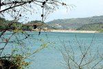 Il Wwf compie 54 anni, tra le oasi difese anche quella del lago Angitola nel Vibonese