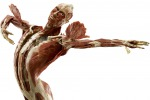 MOSTRE, BODY WORLDS ARRIVA A PALERMO