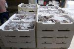 Reggio Calabria, sequestrati due quintali di pesce privo di tracciabilità