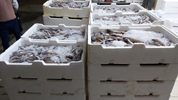 pesce, sequestro, Reggio, Calabria, Cronaca