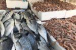Messina, vigili urbani sequestrano 120 kg di orate e gamberetti non commestibili a Santa Lucia