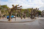 Messina, scheletri di alberi e chioschi chiusi: piazza Cairoli è sempre più un deserto - Foto