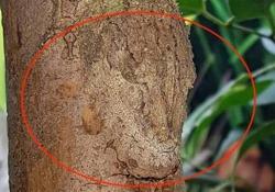 Riuscite a vederlo? Ecco cosa si nasconde su questa pianta Se aguzzate la vista riuscirete forse a distinguere un «ospite» molto particolare - CorriereTV