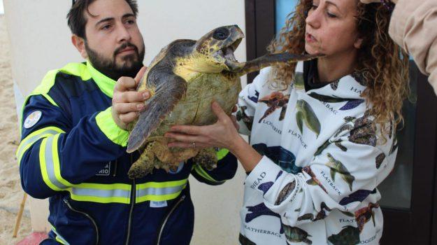 "Spiaggiata sul litorale di Nicotera una tartaruga marina ""Caretta Caretta"""