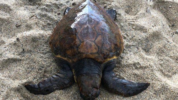 guardavalle, siracusa, tartaruga, Sicilia, Società