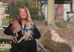 Torna «Dalla parte degli animali» Il teaser della trasmissione ideata e condotta da Michela Vittoria Brambilla - Corriere Tv
