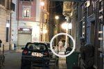 Corre nudo per il centro di Cosenza: il video fa il giro del web