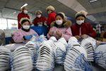 Il virus cinese è arrivato all'uomo dai serpenti: salgono a 17 i decessi
