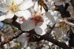 Caldo in Sicilia, api al lavoro con settimane di anticipo