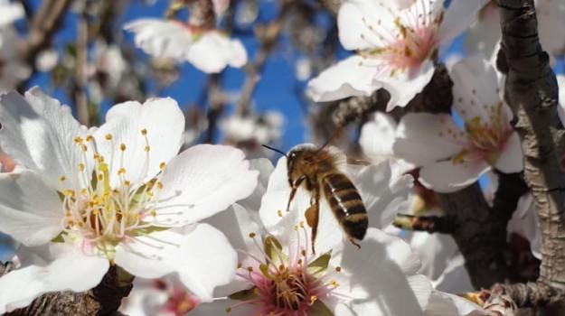 api, clima, coldiretti, food, miele, Terra e Gusto