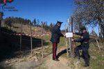 Scala Coeli, scoperta una truffa sui fondi per le aree incendiate: due denunce