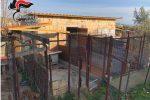 Allevamento di cani illegale a Crotone, denunciato un operaio