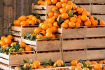 L'allarme di Coldiretti Calabria: a rischio l'avvio della stagione agrumicola, manca la manodopera