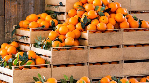 agricoltura, Cosenza, Calabria, Economia