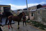 """Viaggio fra le """"stalle"""" di Maregrosso a Messina: cavalli segregati, accanto un deposito di farmaci"""