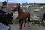 Siracusa, corsa clandestina di cavalli: inchiodati da un video