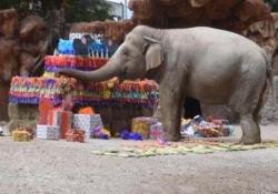 Guatemala, la festa di compleanno dell'elefante «Trompita» Una torta a base di frutta e verdura per l'animale più amato dello zoo - Ansa