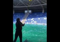 Il delfino gioca a calcio con la sua istruttrice L'allenatrice di delfini Anna Chulkova ha mostrato come si può insegnare anche il calcio a questi stupendi animali - Dalla Rete