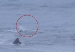 Il surfista aspetta l'onda, ma a pochi metri si aggira uno squalo La scena è stata girata al largo della costa della Carolina del Nord, USA - CorriereTV