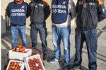 Tremestieri, sequestrati 15 kg di polpa di ricci: 1500 euro di multa ad autotrasportatore