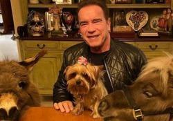 Schwarzenegger adotta un asinello come animale domestico «LuLu» terrà compagnia al pony «Whiskey», che vive con l'attore da più di 10 anni - CorriereTV