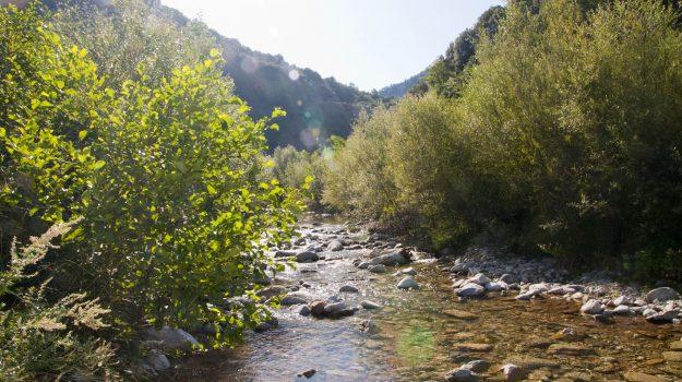 acque, depuratore, torrente, Cosenza, Calabria, Cronaca