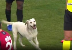 Turchia, il cane fa invasione di campo e ferma il gioco Non tutte le invasioni di campo generano simpatia - Dalla Rete