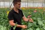Pizzo, quintali di fiori mandati al macero: perdita da 1,5 milioni per un'azienda