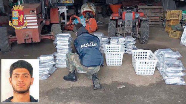 'ndrangheta, cocaina, droga, Rocco Molè, Reggio, Calabria, Cronaca