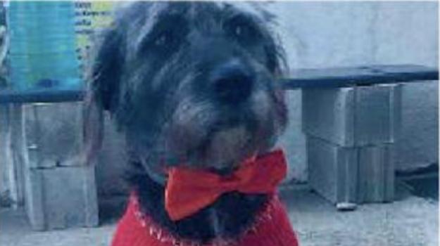cane ucciso, marina di gioiosa, Reggio, Calabria, Cronaca