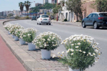 Litoranea nord di Messina, presto verrà installato lo spartitraffico