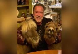 Arnold Schwarzenegger, il suo pony e l'asinello, invitano gli americani a restare in casa L'attore partecipa alla campagna per rimanere in casa in auto-quarantena - Dalla Rete