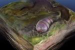 Un verme risalente a 555 milioni di anni fa è stata la prima creatura vivente