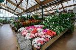 Calabria, 1 milione per le aziende florovivaistiche in crisi