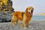Taurianova, porta dal veterinario il cane malato e viene multata insieme al padre