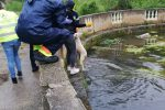Due cani finiscono nella fontana della villa comunale di Isola, salvati