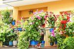 Italiani in quarantena, dai fiori agli ortaggi: è boom dell'orto in balcone