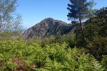 """Un trekking virtuale per """"camminare"""" nel cuore dei monti Peloritani"""