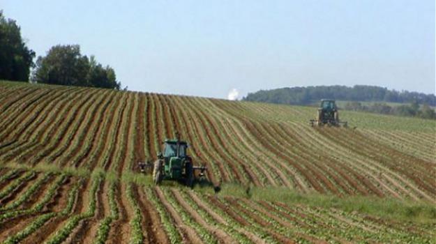 agricoltura, bando, psr, Gianluca Gallo, Calabria, Economia