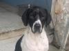 Messina, in scadenza bando per affidamento cani: gestori dei canili scrivono al sindaco