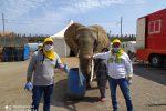 Circo bloccato a Santa Teresa di Riva per il Coronavirus, consegnato cibo per gli animali