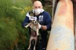 Isola, cagnolino precipita in un canalone e viene salvato da un artigiano