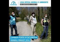 «Dalla parte degli animali, anche durante l'emergenza coronavirus» I volontari della Leidaa si muovono in tutta Italia per prendersi carico degli animali di quanti, durante l'emergenza, non riescono ad aiutare i propri cuccioli - Corriere Tv