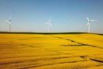 I webinar del Pd Calabria: protagonista il tema della transizione ecologica