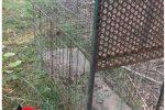 Lamezia, sequestrate tre gabbie trappola per la cattura di animali selvatici