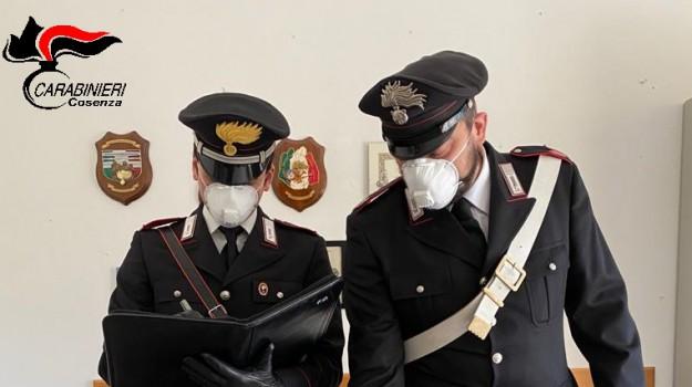 grimaldi, reddito di cittadinanza, Cosenza, Calabria, Cronaca