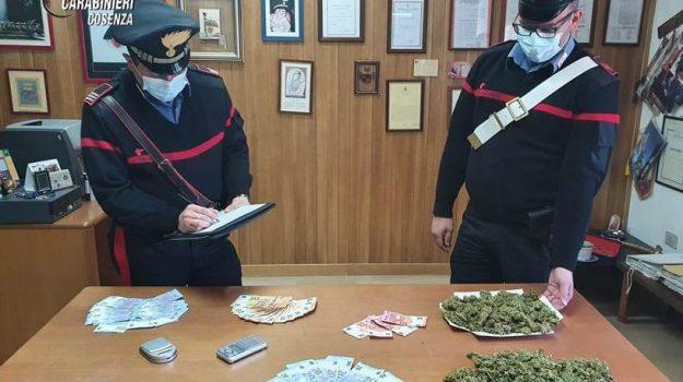 marijuana, san giovanni in fiore, Cosenza, Calabria, Cronaca