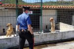 Carenze nello smaltimento dei rifiuti e animali maltrattati, sequestrato un canile a Sant'Ilario - Video
